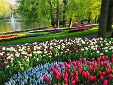 Королевский парк цветов Кёкенхоф, Нидерланды