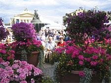 Неделя цветов в Тампере
